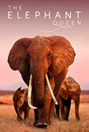 Poster Elephant Queen 2019 Mark Deeble and Victoria Stone